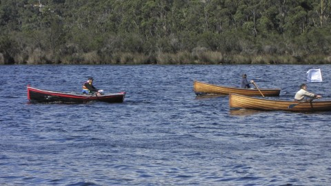 Racing Grebes on the Huon River Tasmania